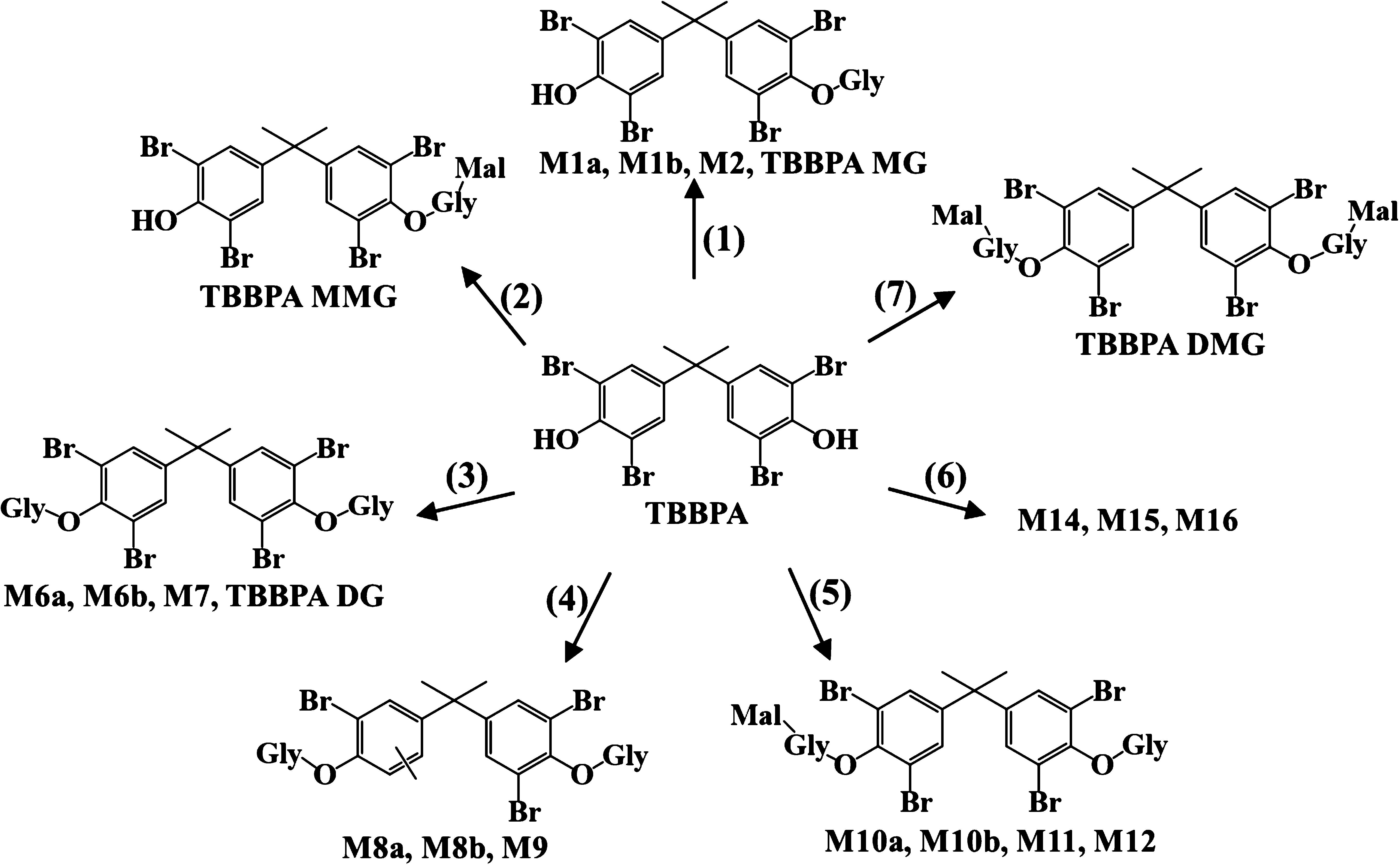 TBBPA metabolites
